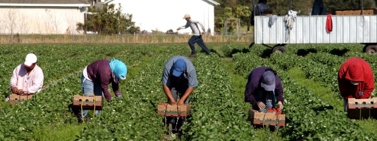 В Германии хотят разрешить украинцам работать в сельском хозяйстве
