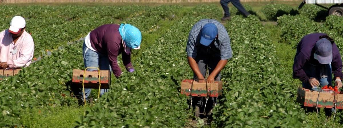На 20 тис злотих оштрафували фірму в Польщі за незаконне працевлаштування іноземців