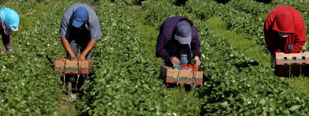 У Польщі можуть дозволити сезонним працівникам з України відбувати карантин у полі