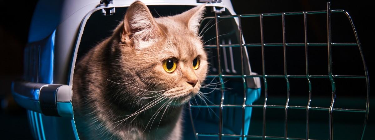 Перевезення домашніх тварин через польський кордон: які документи необхідні
