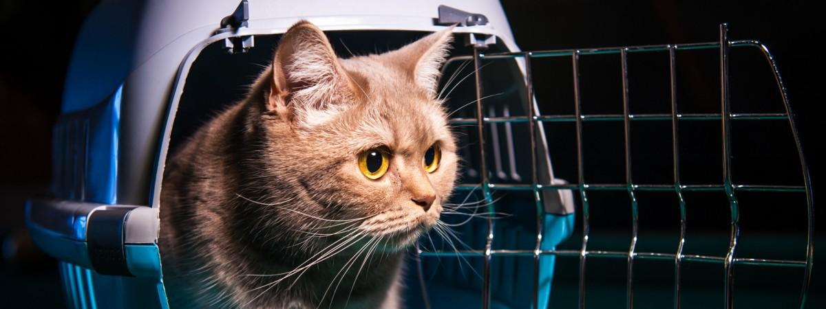 Перевозка домашних животных через польскую границу: какие документы необходимы