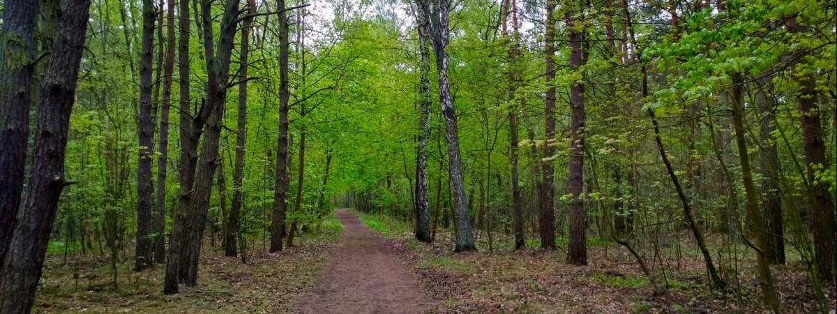 Польща: українця жорстоко побили й покинули в лісі