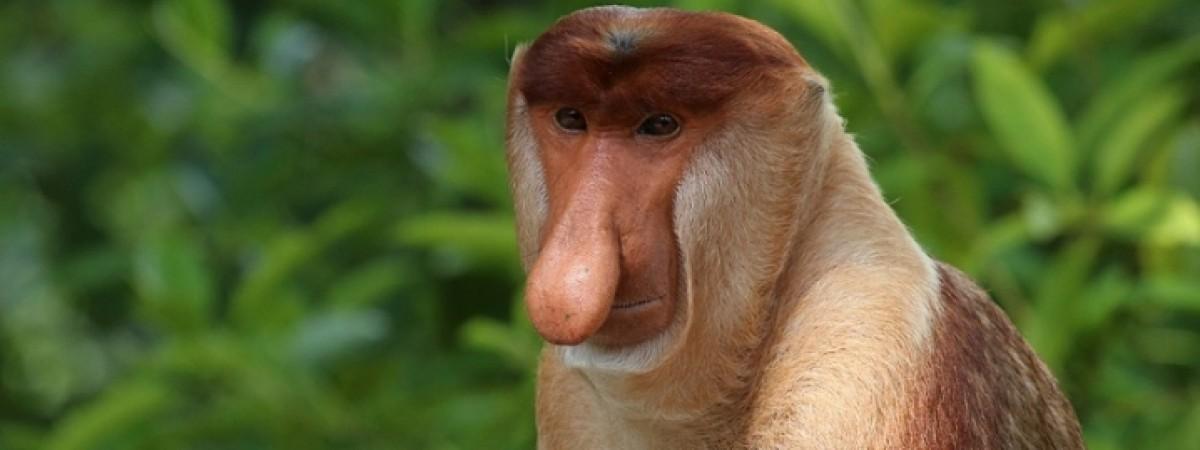 Мавпа-українець - як поляки сміються над українцями та над собою