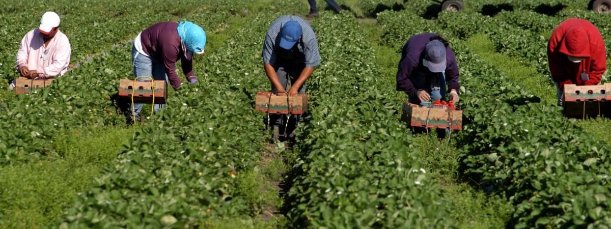 У Німеччині хочуть дозволити українцям працювати в сільському господарстві