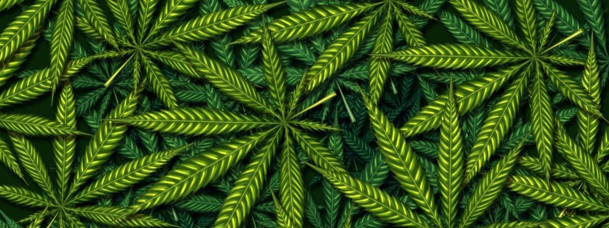 В Польше стартовали продажи марихуаны. Только по рецепту