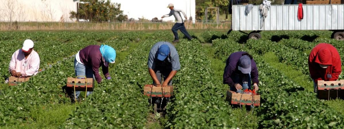 Збирання огірків у Польщі: українка отримали перелом обох ніг та руки