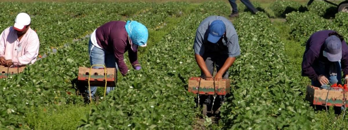 На 20 тыс злотых оштрафовали фирму в Польше за незаконное трудоустройство иностранцев