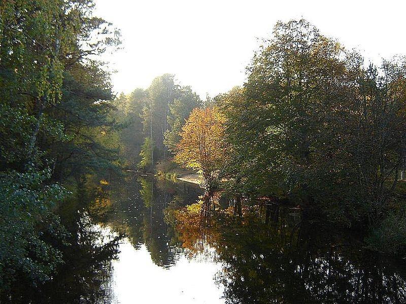 Лесные массивы в Польше (Боры Тухольские)
